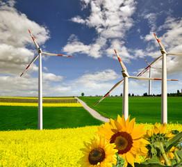 Windkraft, Raps und Sonnenblumen :)