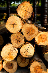 Piled tree trunks closeup, Stack of cut logs wood at constructio