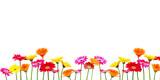 Blumen Freisteller