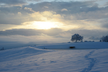Oak at snowy sunrise