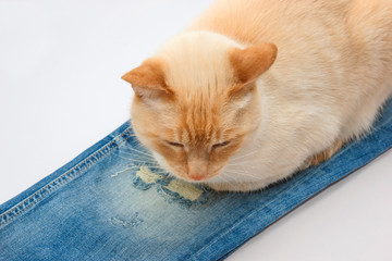 cat lying on jeans