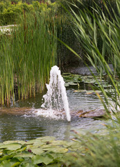 Beautiful Formal Garden with fountain