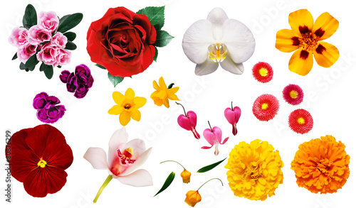 In de dag Narcis clipart fiori