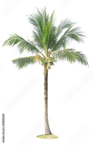 Plexiglas Palm boom Coconut palm tree isolated on white background