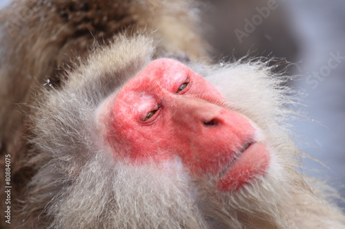 Foto op Aluminium Aap Snow monkey in hot spring