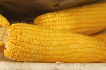 Fresh corn at the market