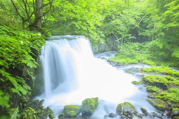 Oirase Stream, Cyoushiootaki, Aomori, Japan