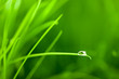 Water Drop on Grass Blade with Sparkle / copy space