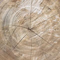 Cut trunk