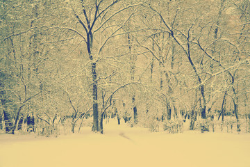 frozen woods, instagram retro style