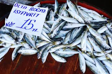 Fresh fish at fish market in Istanbul