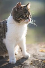 Cute cat posing outdoor