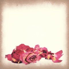 Vintage paper texture, Withered roses and petals.