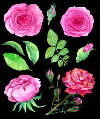 Design set with pink roses and leaves on black