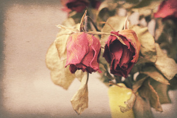 Vintage paper texture, withered or died rose.