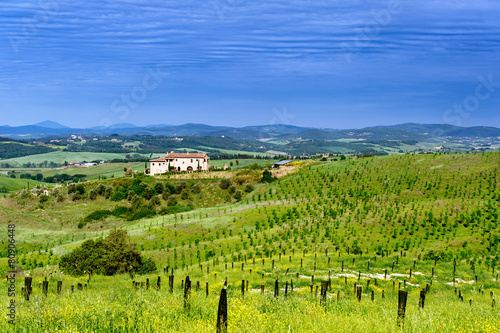 Foto op Canvas Pistache Tuscany - Italy