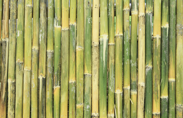 Green bamboo wall texture or background
