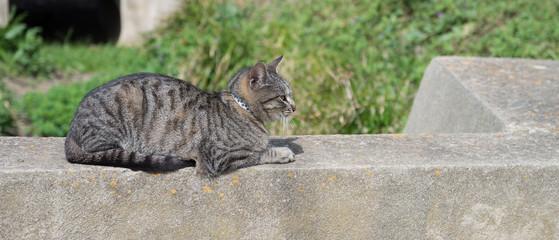 Chat allongé sur un muret
