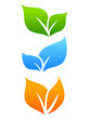 Natural leaves icon