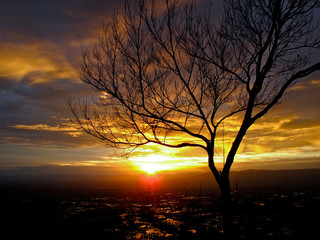 Tree branches on the sunset background