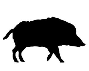 Wildschwein Silhouette