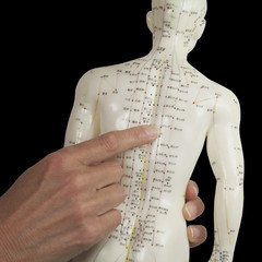Acupuncturist pointing to BL17 on Acupuncture Model