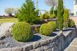 Gepflegter Vorgarten mit Koniferen - 80921809