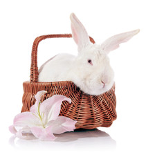 Rabbit in a basket with a lily flower.