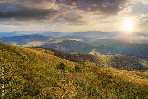 wild flowers on the mountain top at sunset - 80923822