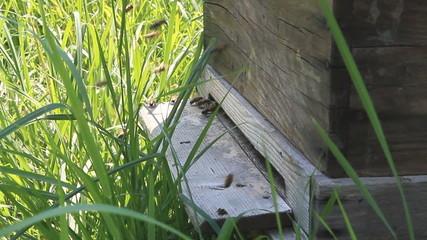 ruche apiculture