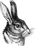 Vintage graphic rabbit head