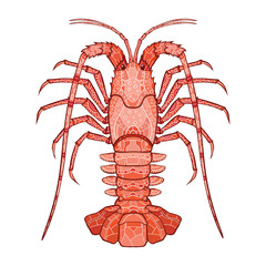 Decorative isolated crayfish