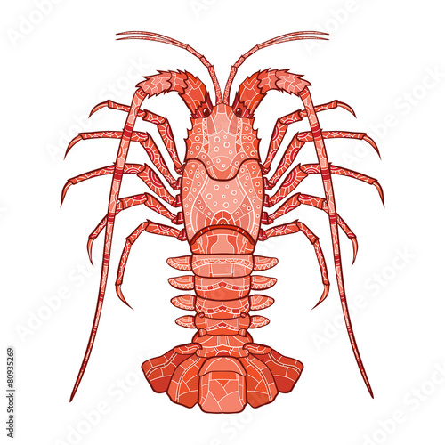 Decorative isolated crayfish - 80935269