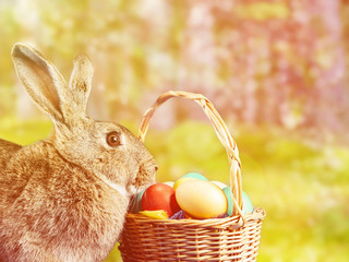Easter rabbit sitting near a basket at sunny day