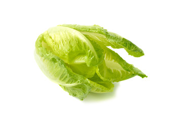 fresh Cos Lettuce on white background