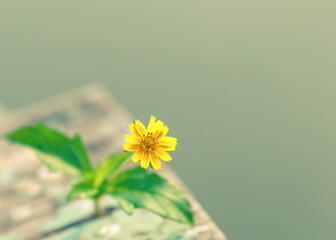 Small yellow flowers on old wooden