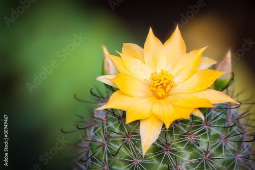 Foto op Canvas Cactus cactus flower
