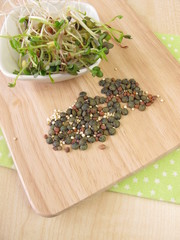 Samen und Sprossen von Linsen, Rettich und Quinoa