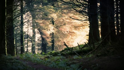 Magical Sunrise In The Forest