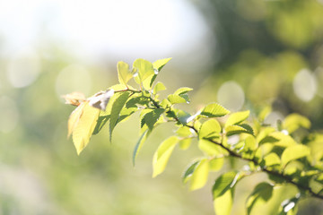 Beautiful tree twig with sun rays