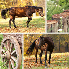 Collage of beautiful brown horse in pasture