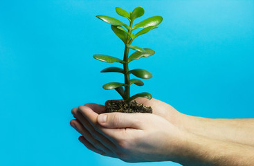 One green plant with soil in male hands on blue background