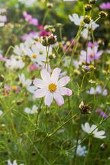 pink flower in green summer garden