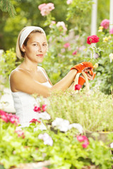A woman gardener pruning roses in a rose garden