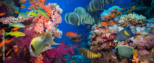 Fototapeta Tropical Fish and Coral Reef