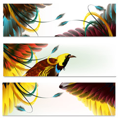 Brochures set with feathers