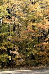 autunno foresta del parco nazionale corno alle scale