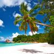 Obrazy na płótnie, fototapety, zdjęcia, fotoobrazy drukowane : Beautiful beach with palm tree at Seychelles