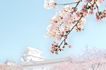 Cherry blossom and castle