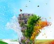 Four season tree - 80968032